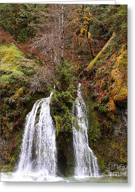 Secret Cave Falls Greeting Card by Tim Rice