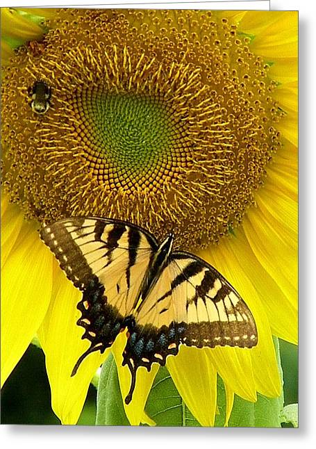 Secret Lives Of Sunflowers Greeting Card