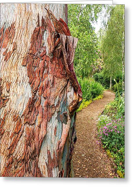 Secret Path Beyond The Magical Tree Greeting Card by Gill Billington