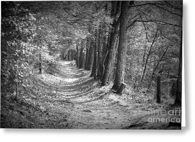 Secret Pathway Greeting Card