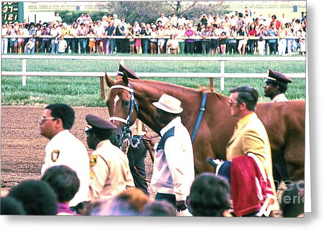 Secretariat Race Horse Looking At Me Before He Won A Big Race At Arlington Race Track In 1973.  Greeting Card