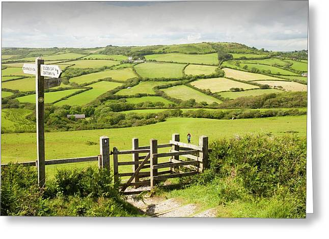 Section Of The South West Coast Path Greeting Card by Ashley Cooper