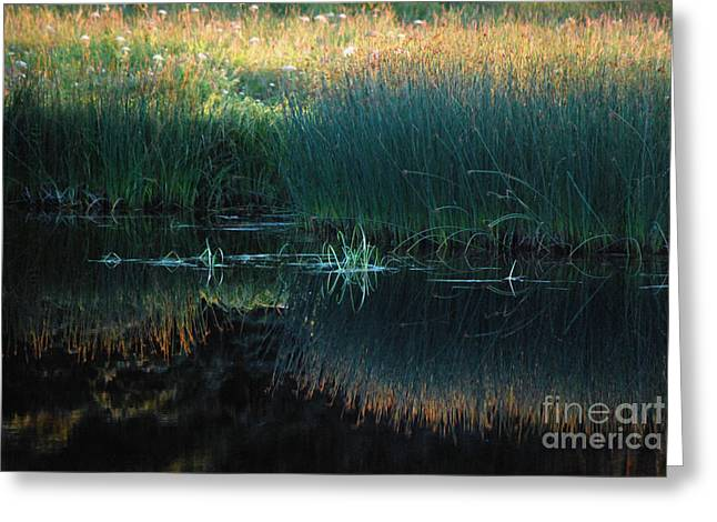 Greeting Card featuring the photograph Sedges At Sunset by Cynthia Lagoudakis