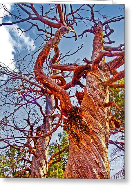 Sedona Arizona Ghost Tree Greeting Card by Gregory Dyer