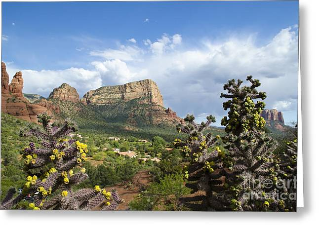 Sedona Cactus In Bloom Greeting Card
