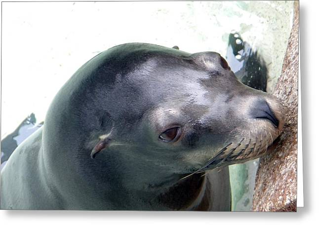 Greeting Card featuring the photograph See Me Seal by Amanda Eberly-Kudamik