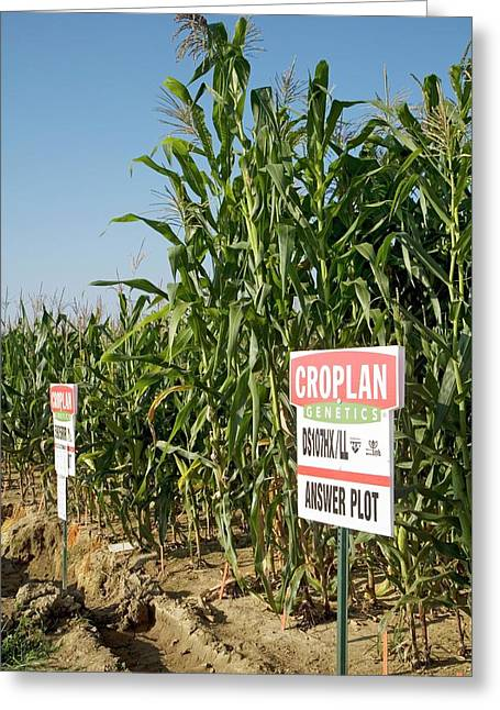 Seed Company Crop Demonstration Plot Greeting Card