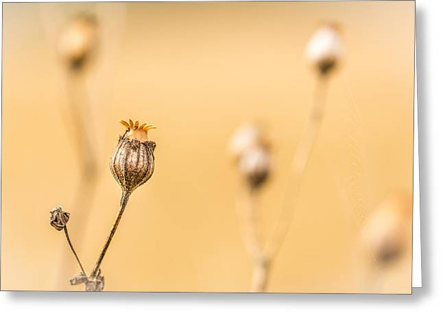 Seed Pod. Greeting Card