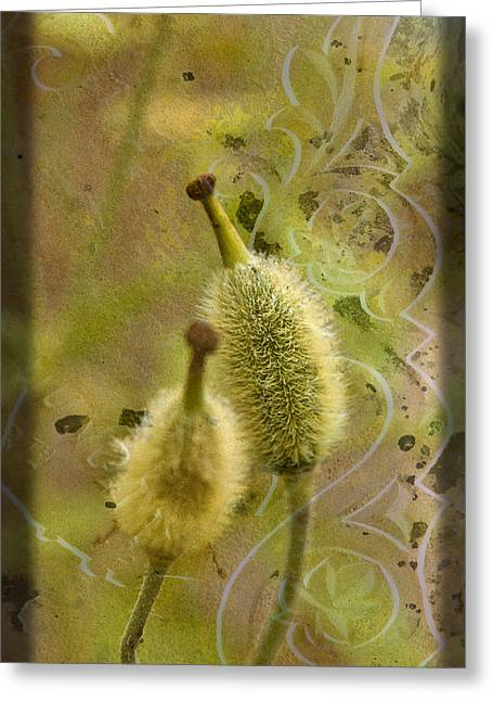 Greeting Card featuring the photograph Seed Pods - Meconopsis Paniculata by Liz  Alderdice