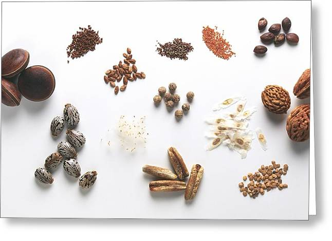 Seed Specimens Greeting Card by Science Photo Library