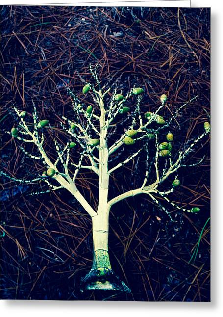 Seeded Tree's Greeting Card