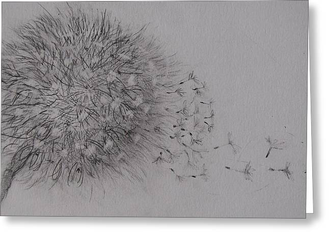 Seedhead Greeting Card by Anne Parker