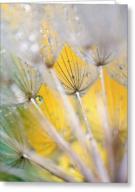 Seedhead With Raindrops Greeting Card by Jaynes Gallery