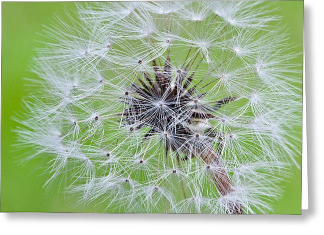 Seeds Of Life Greeting Card