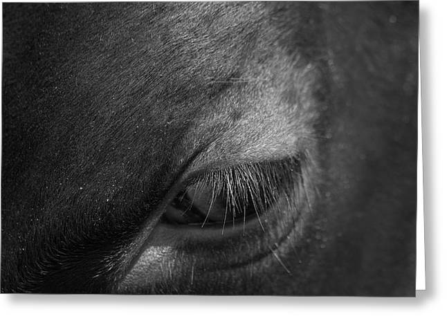 Seeing Into The Soul Greeting Card by Karol Livote