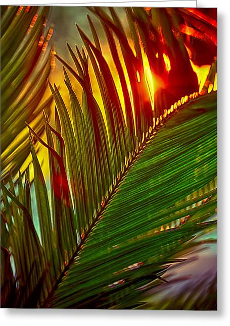Sego Frond Fire Greeting Card by Scott Campbell