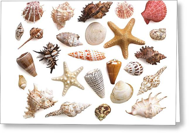 Selection Of Sea Shells And Star Fish Greeting Card by Science Photo Library