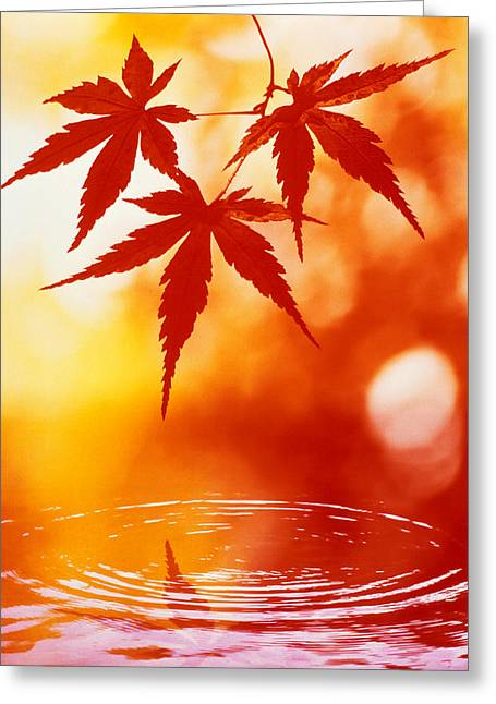 Selective Focus Of Red Leaves Greeting Card by Panoramic Images