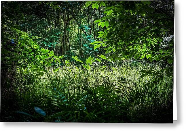 Seminole County Florida Environmental Center Along The Florida Trail     Greeting Card by Rich Franco
