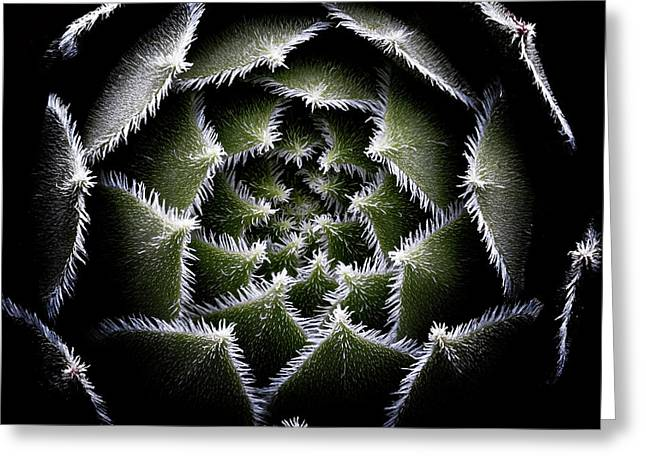 Sempervivum Rosette Greeting Card by Victor Mozqueda