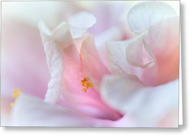 Sensuality. Peach Hibiscus. Macro Greeting Card by Jenny Rainbow