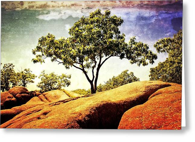 Sentinal Tree Greeting Card by Marty Koch