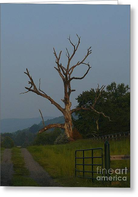 Greeting Card featuring the photograph Sentinel by Jane Ford
