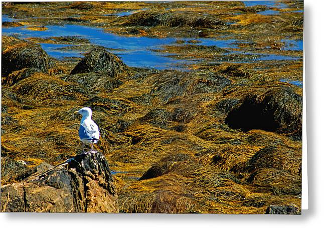 Greeting Card featuring the photograph Sentinel Seagull by Nancy De Flon