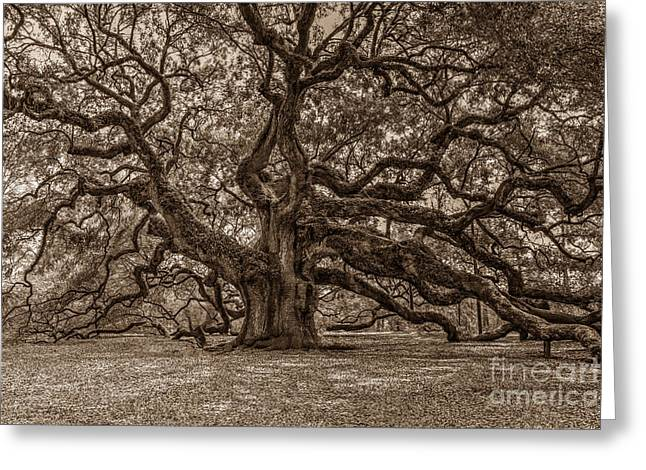 Sepia Angel Oak Greeting Card