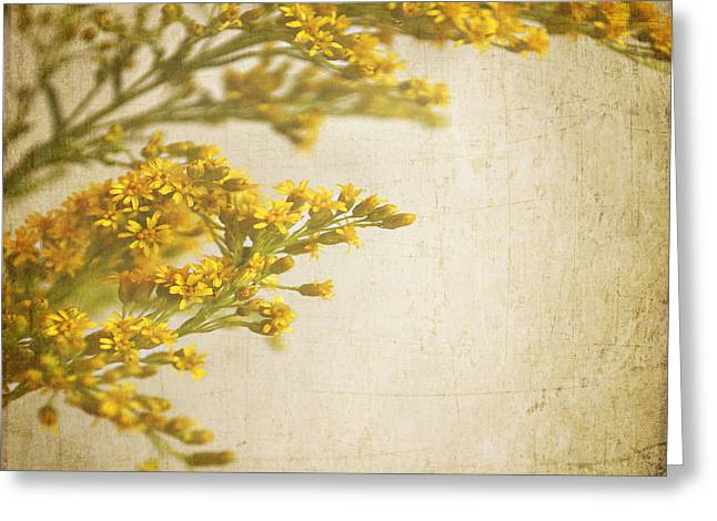 Sepia Gold Greeting Card by Lyn Randle