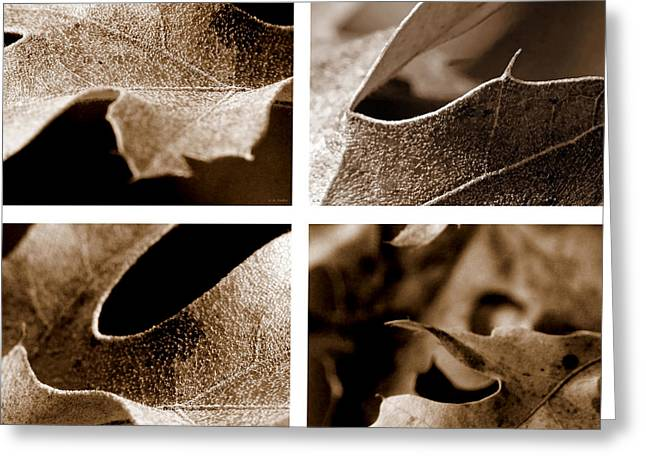 Greeting Card featuring the photograph Sepia Leaf Collage by Lauren Radke
