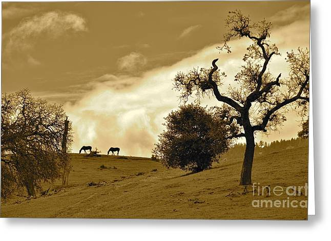 Sepia Of Two Horses Greeting Card by Amy Fearn