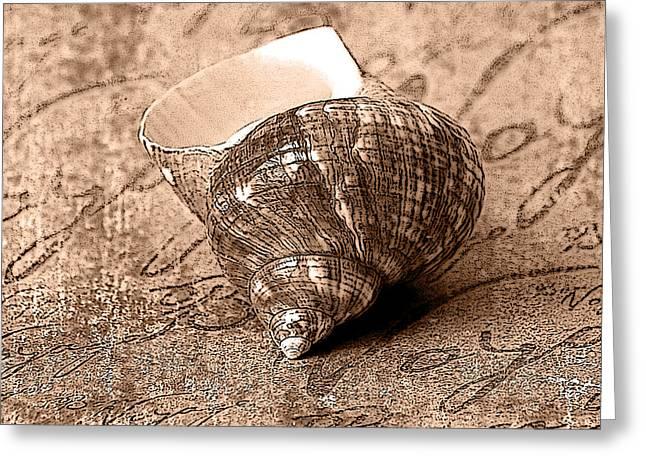 Sepia Seashell Greeting Card by Karen Stephenson