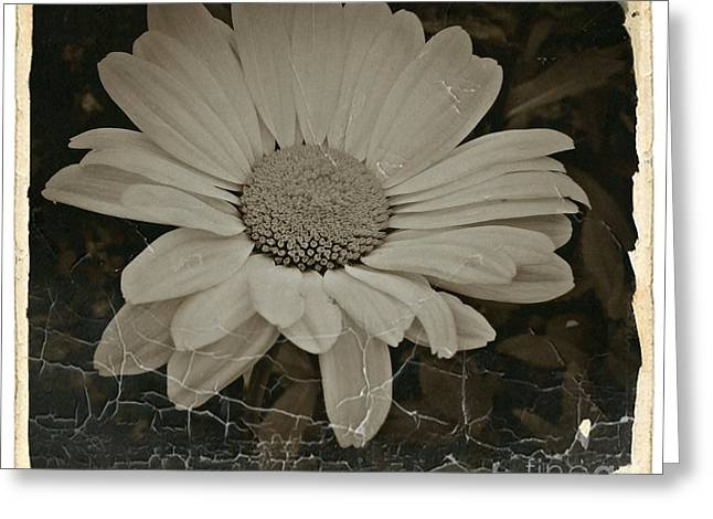 Sepia Vintage Daisy 1 Greeting Card
