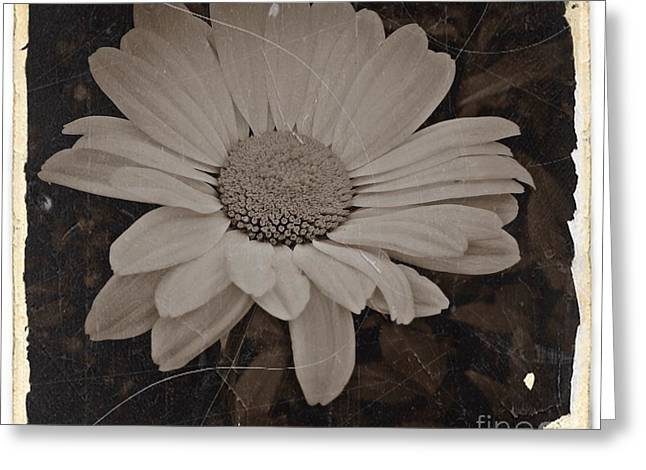 Sepia Vintage Daisy 2 Greeting Card