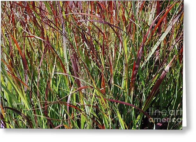September Grasses By Jrr Greeting Card by First Star Art