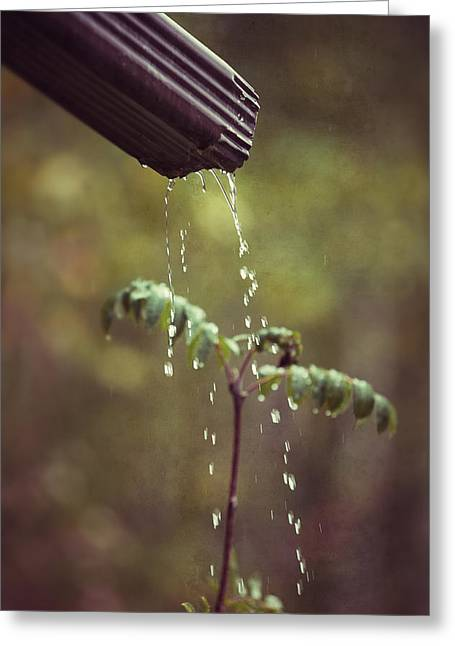 September In The Rain Greeting Card by Ari Salmela