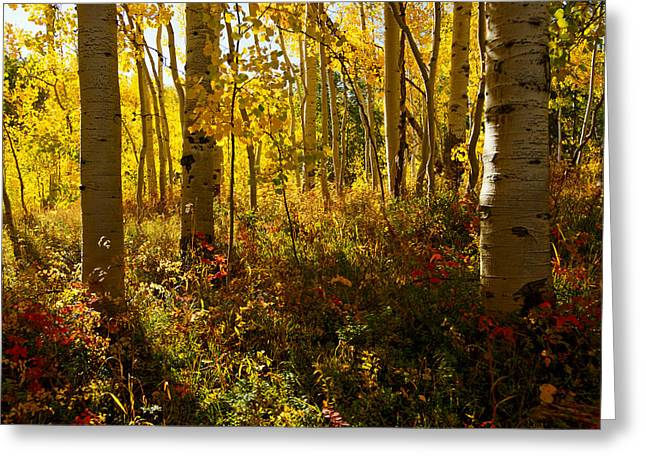 September Scene Greeting Card by Jeremy Rhoades
