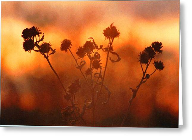 Greeting Card featuring the photograph September Sonlight by R Thomas Brass