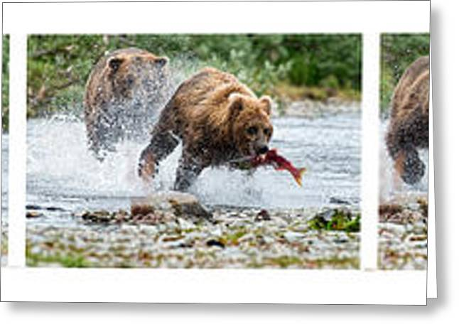 Sequence Of Large Brown Stealing Salmon From Smaller Brown Bear Greeting Card by Dan Friend