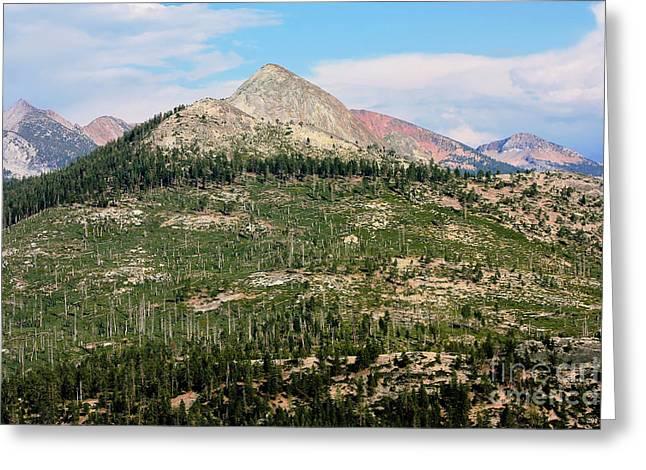Sequoi National Park Greeting Card by Sophie Vigneault