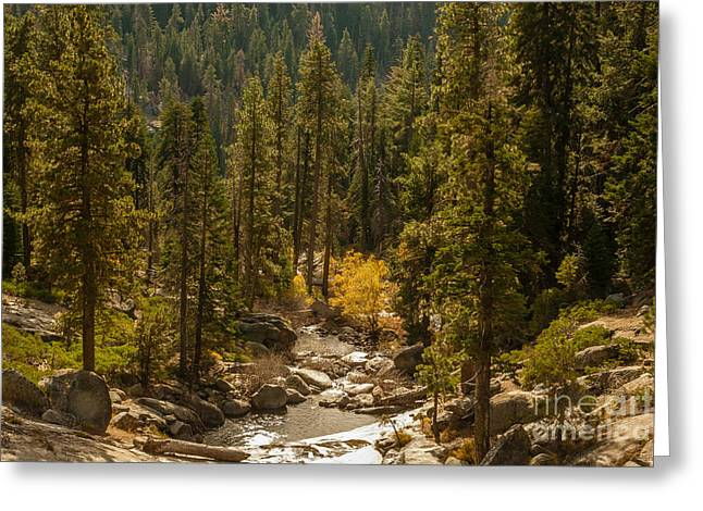 Sequoia National Park  1-7832 Greeting Card