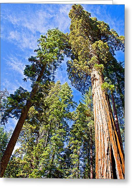 Sequoias Reaching To The Clouds In Mariposa Grove In Yosemite National Park-california Greeting Card