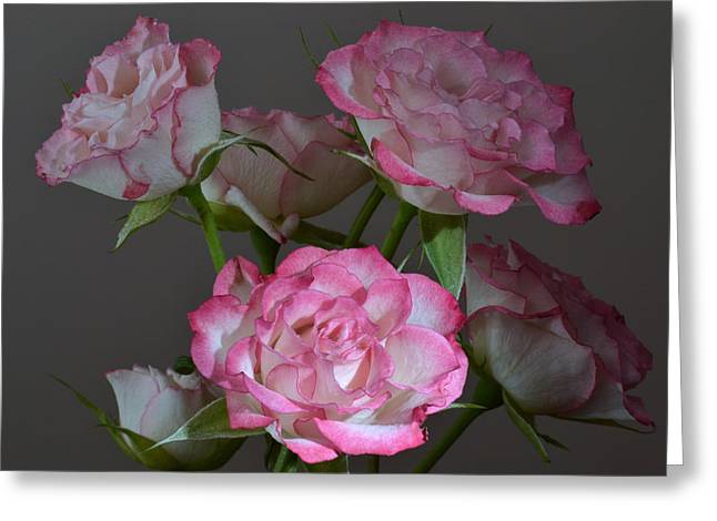 Serene Roses. Greeting Card by Terence Davis
