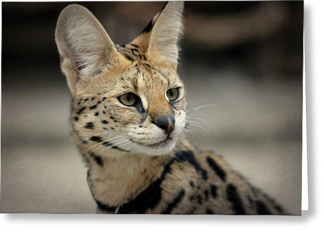Serene Serval Greeting Card