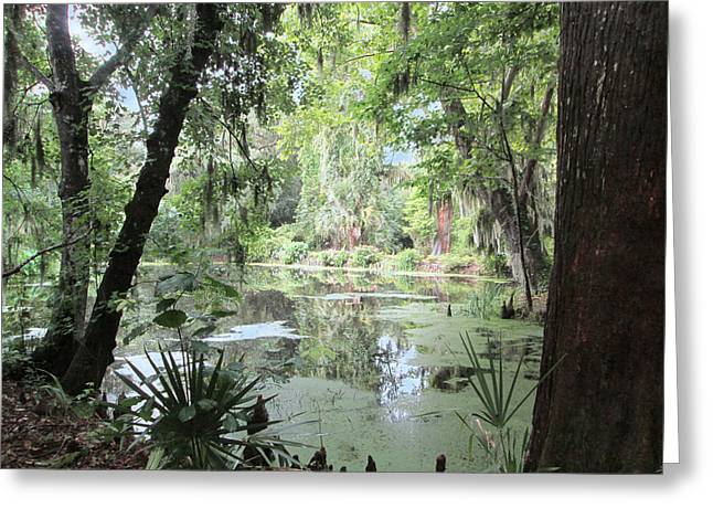 Serene Swamp Greeting Card by Silvie Kendall
