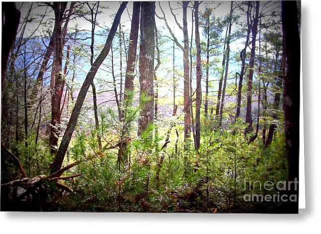 Serene Woodlands Greeting Card