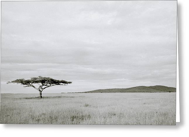 Serengeti Acacia Tree  Greeting Card by Shaun Higson