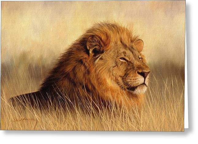 Serengeti Glow Greeting Card by David Stribbling