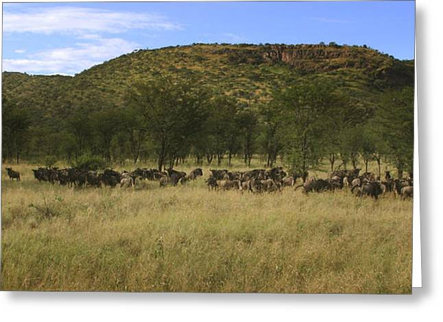Greeting Card featuring the photograph Serengeti by Joseph G Holland